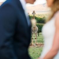Dave & Liza Photography Leopard Lodge Wedding DN-5001-6.jpg